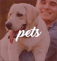 PlaquinhaFlex - Pets